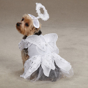 Angel Paws Costume
