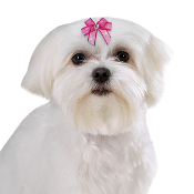 Aria Jasmine Barrette for Dogs