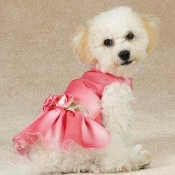 East Side Collection Spring Shimmer Dog Dress